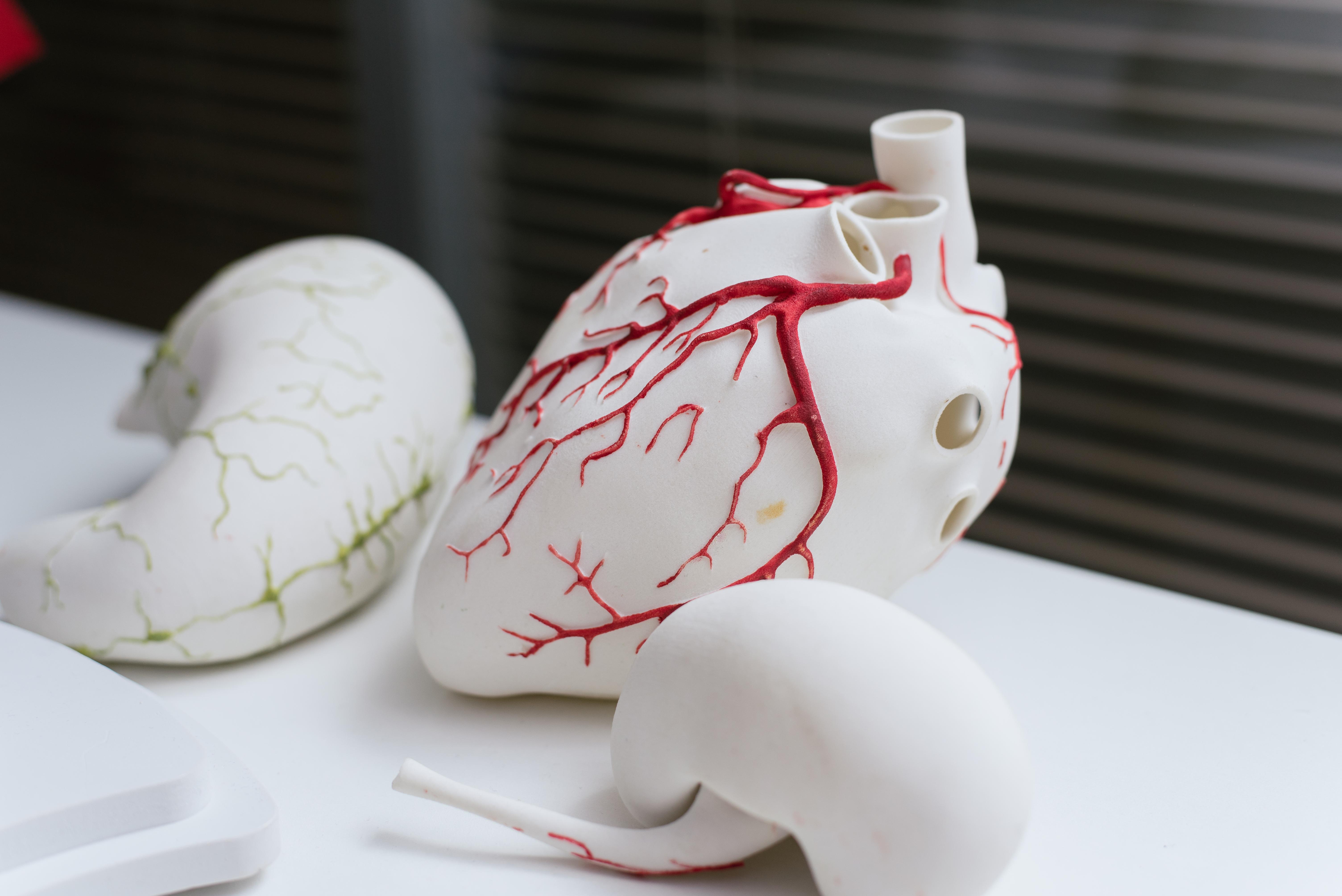3d-models-organs-printed-3d-printer-heart